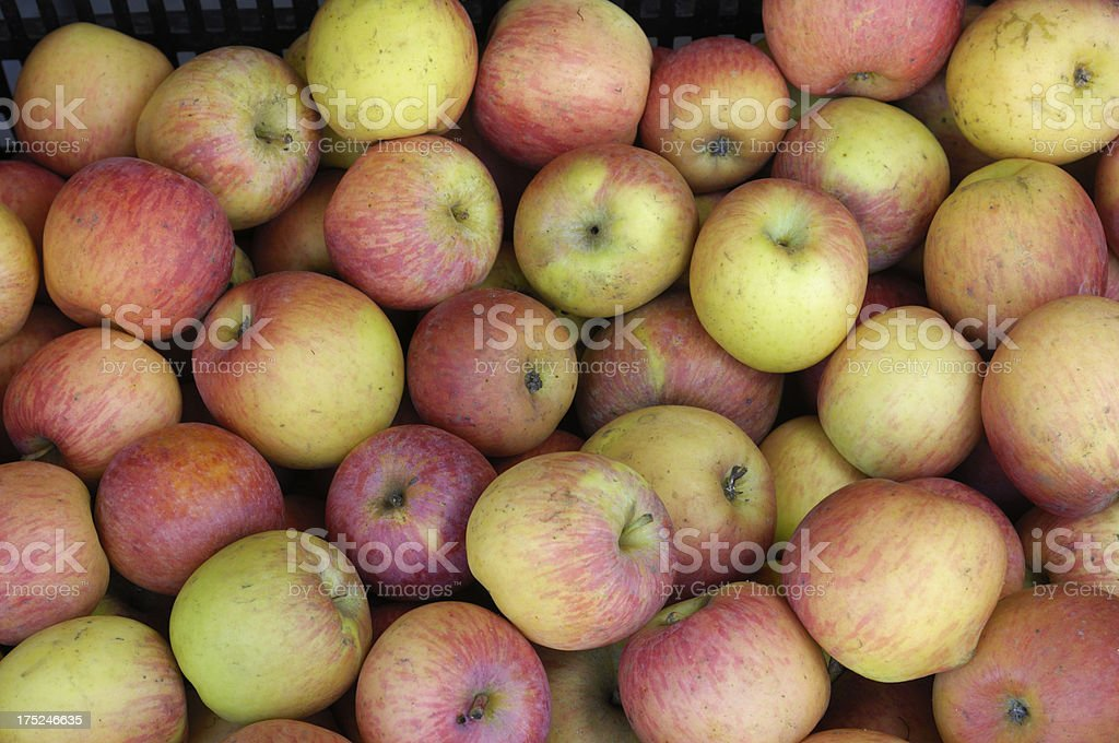 Close-up of Organic Apples Being Processed royalty-free stock photo