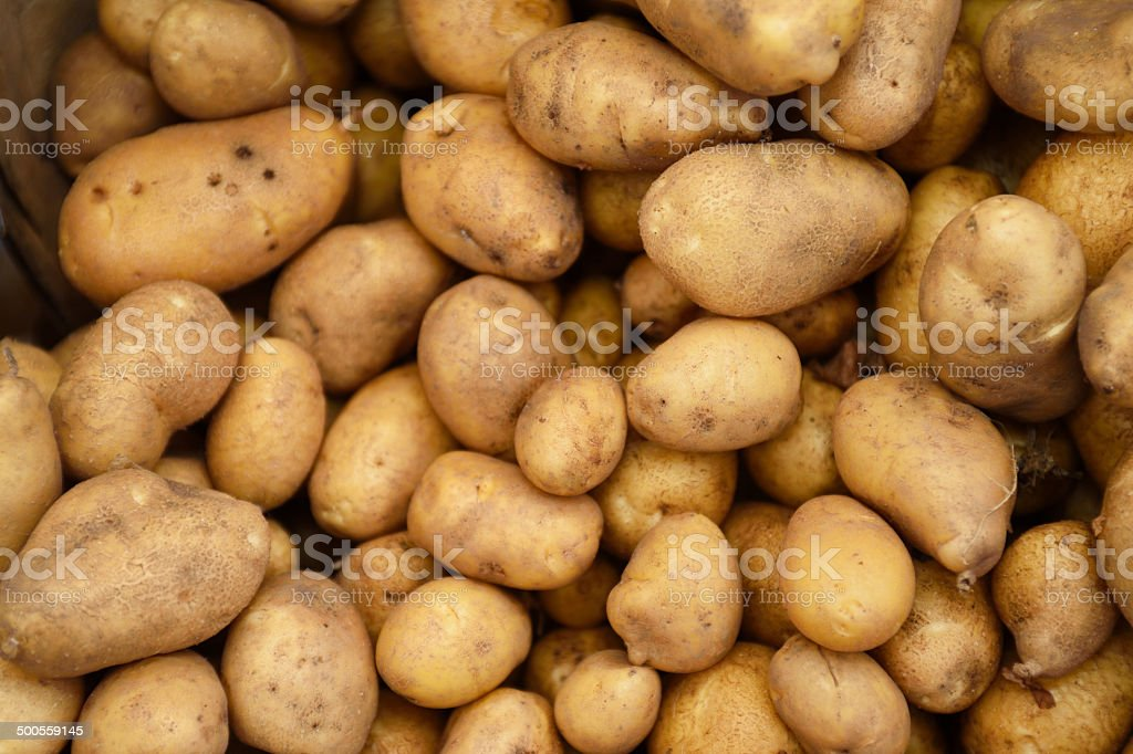 Close-up of Organic Potatoes at Farmer's Market royalty-free stock photo