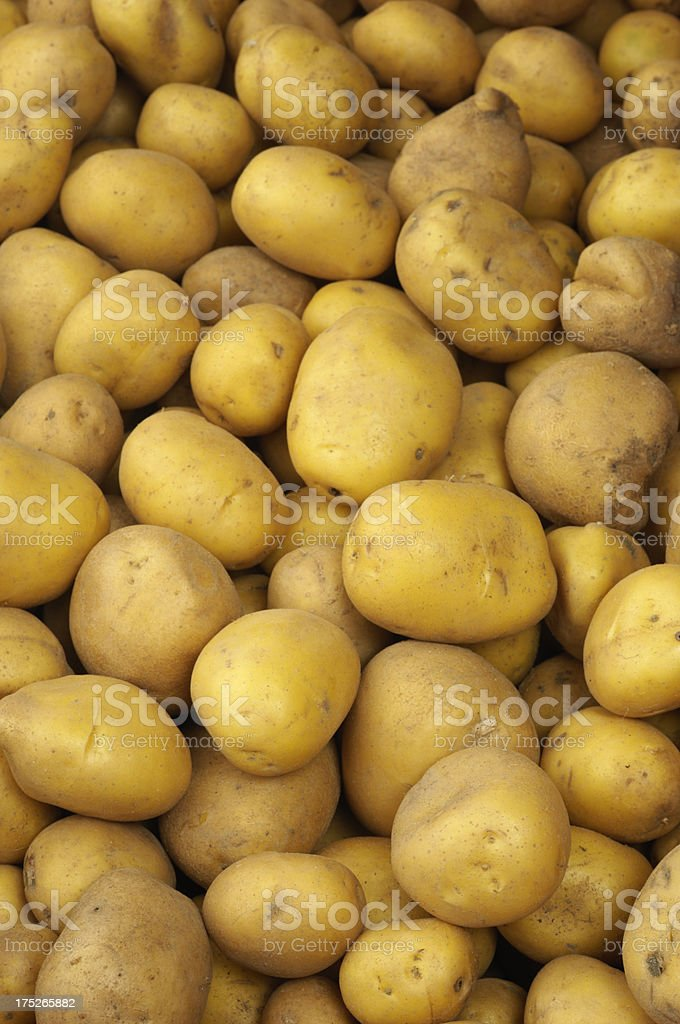 Close-up of Organic Potatoes Being Processed royalty-free stock photo