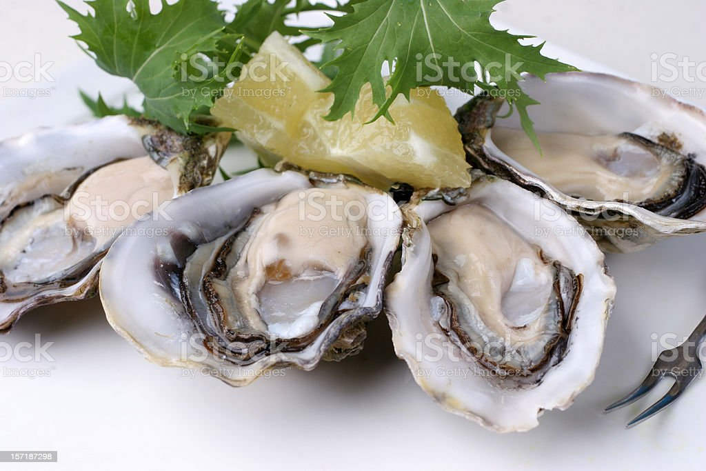 closeup of pacfic oysters stock photo