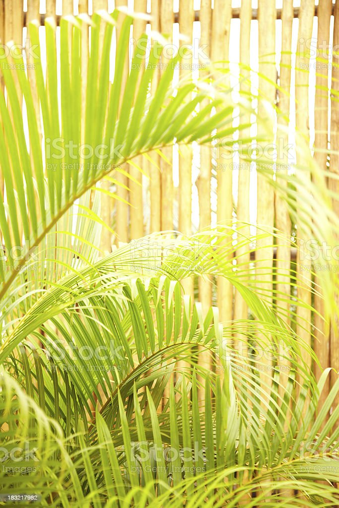 Close-up of palm leaves and bamboo fence stock photo