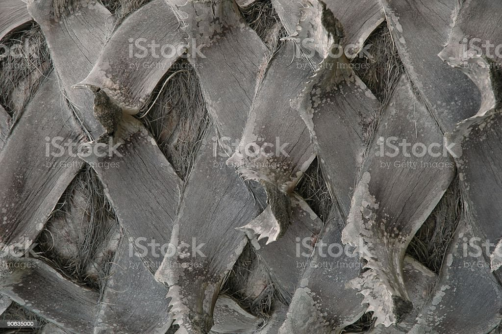 Closeup of palm tree trunk royalty-free stock photo