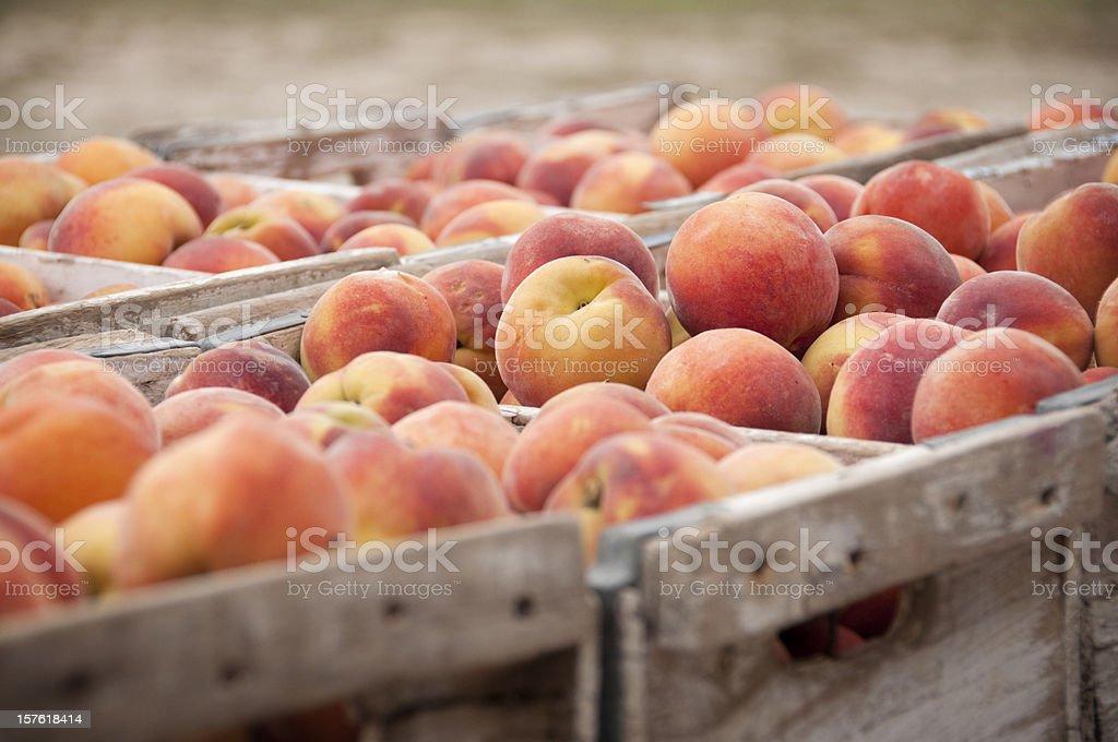 Close-Up of Peach Crates stock photo