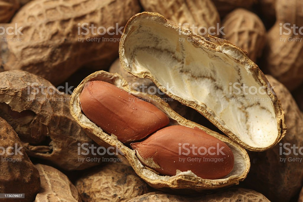 Close-up of Peanuts in Shell stock photo