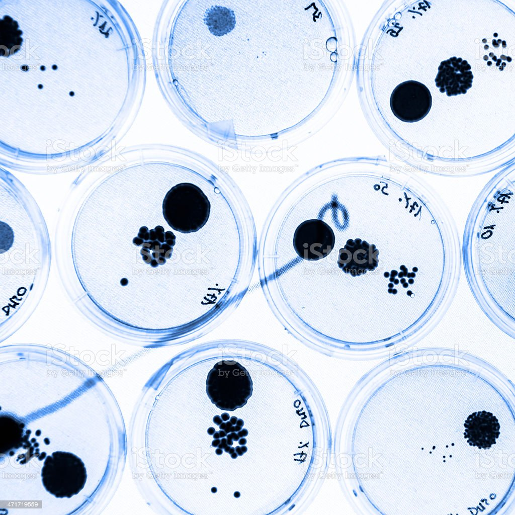 Close-up of petri dishes growing bacteria royalty-free stock photo