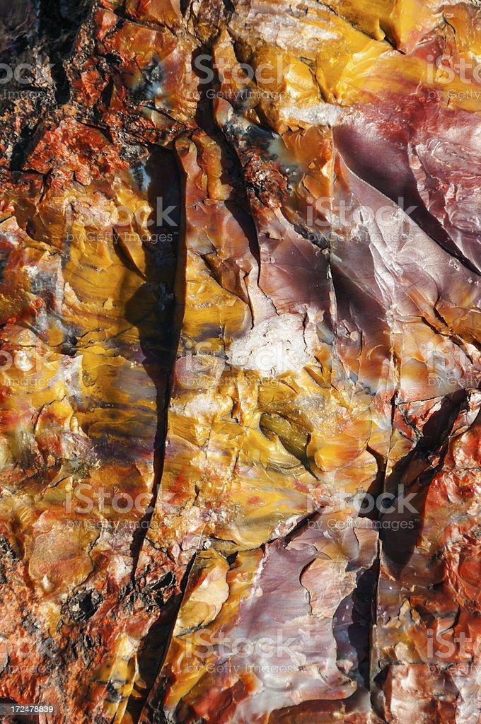 Closeup of Petrified Wood royalty-free stock photo