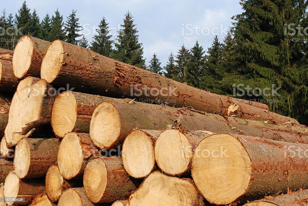 Close-up of piles of hopped wood logs in the forest stock photo