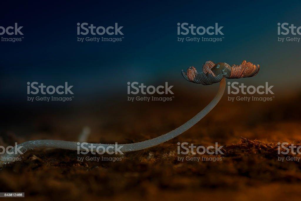 closeup of poisonous mushroom stock photo