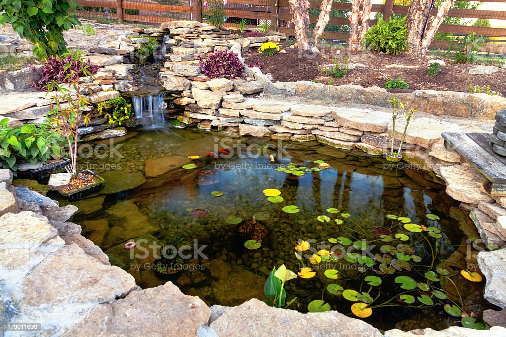 Close-up of pond with green leaves inside stock photo