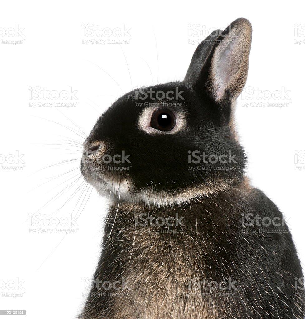 Close-up of rabbit royalty-free stock photo