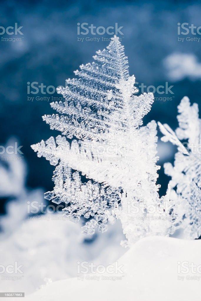 Close-up of real snowflake royalty-free stock photo