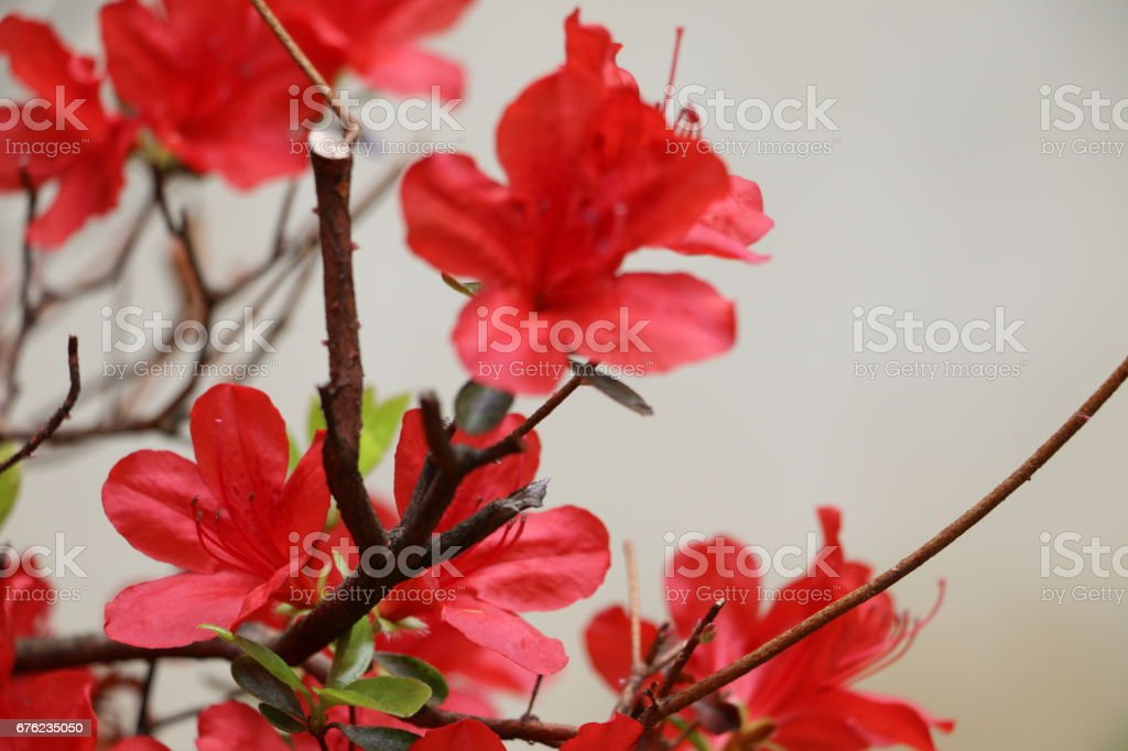 Closeup of Red flowers in bloom stock photo