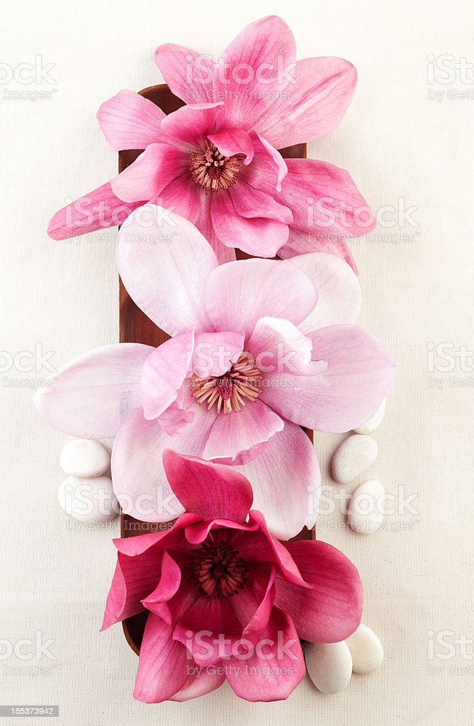 Closeup of red magnolia flowers on wooden bowl. royalty-free stock photo