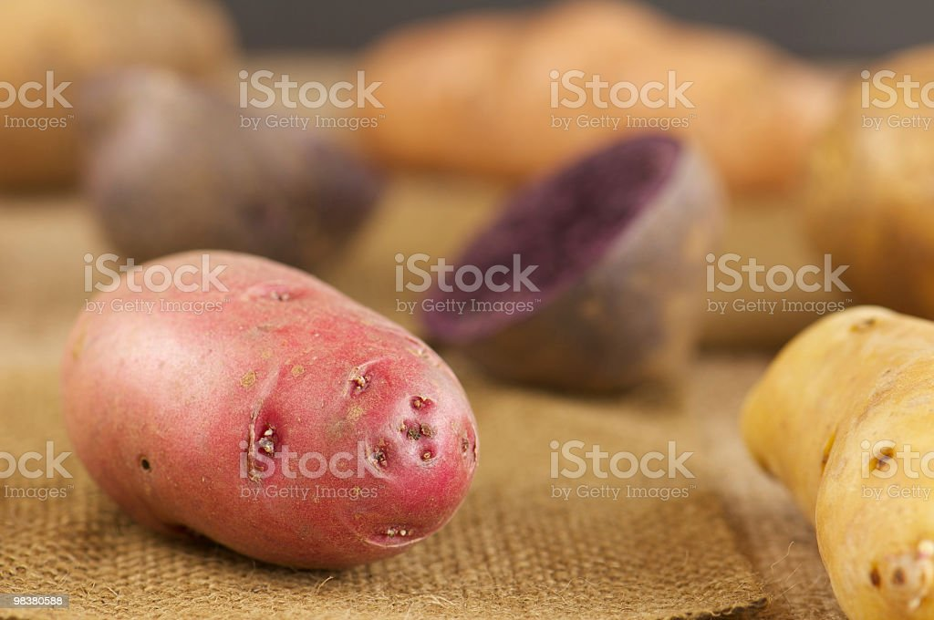 Close-up of Red Potato on Burlap royalty-free stock photo