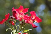 Closeup of red roses blooming  in garden