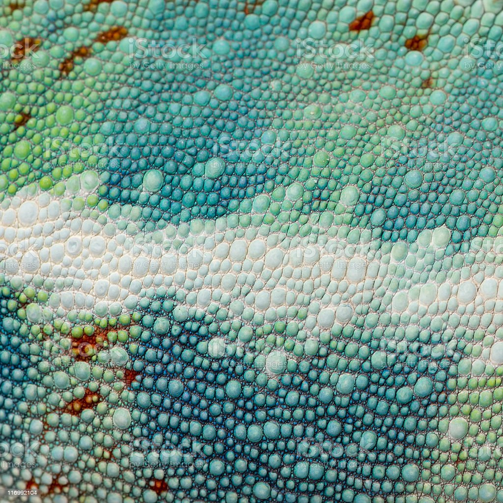 Closeup of reptile skin with blue, green, and white features royalty-free stock photo