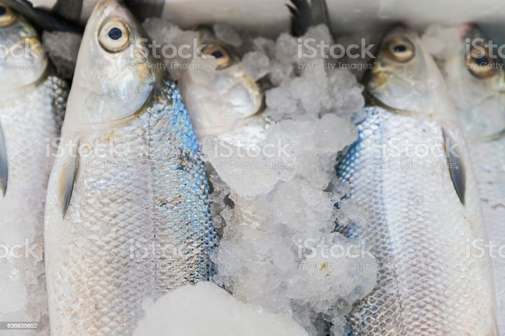 Close-up of Salmon at Deira Fish Market stock photo