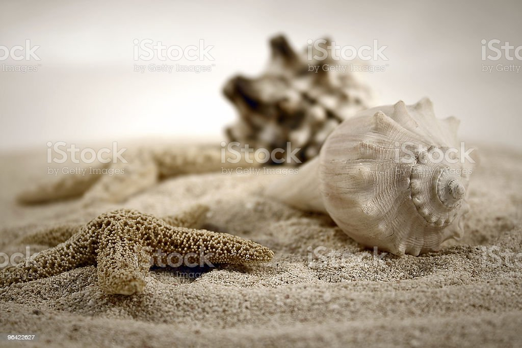 Close-up of sand and various seashells stock photo