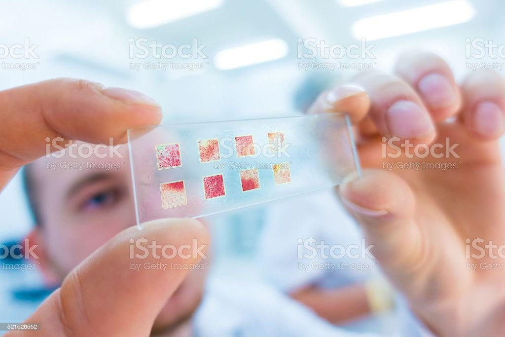 close-up of scientist hands with microscope slide, examining sam stock photo