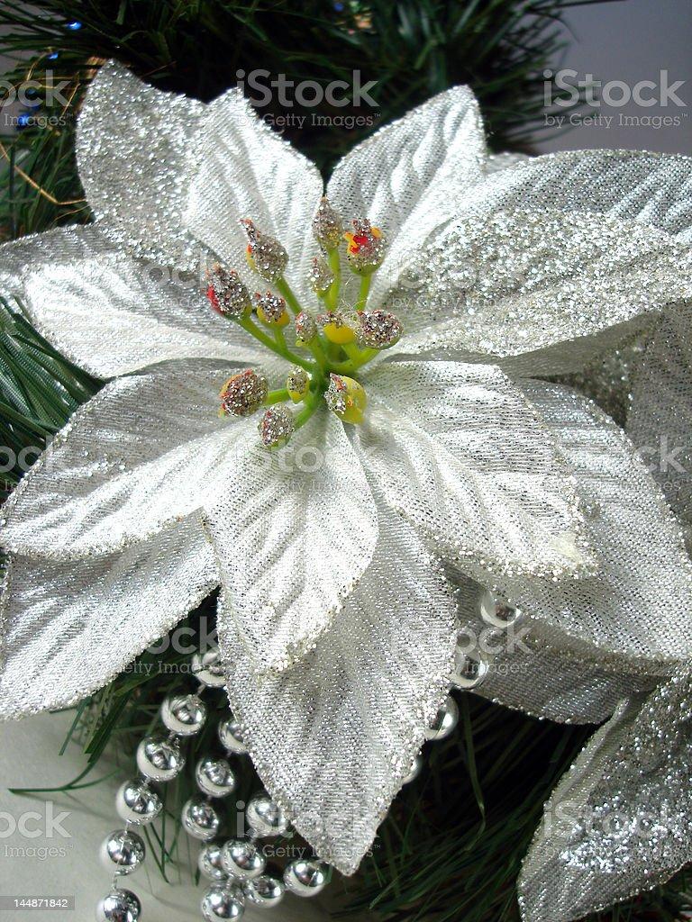close-up de prata Natal flor bico-de-papagaio foto de stock royalty-free
