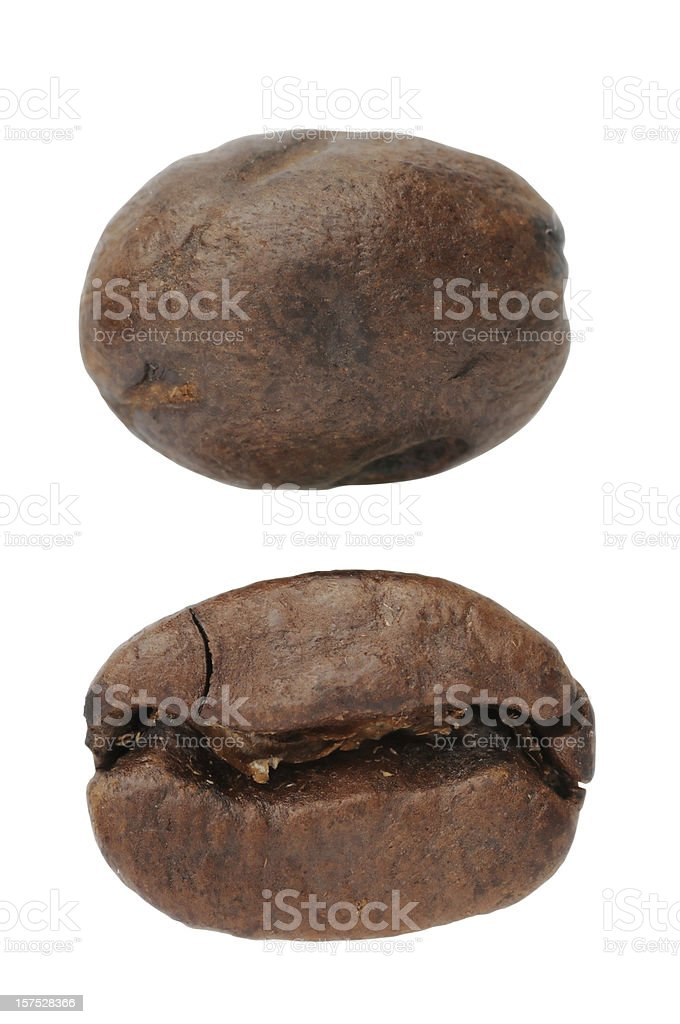 Close-up of Single Coffee Bean stock photo
