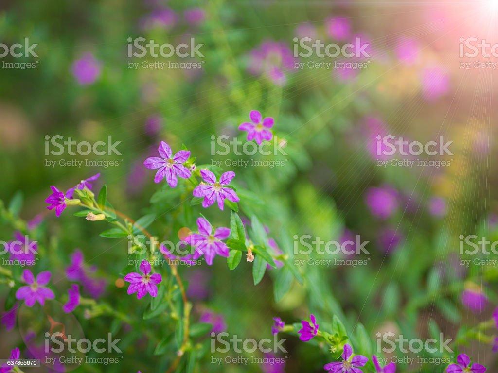 closeup of small purple flower stock photo