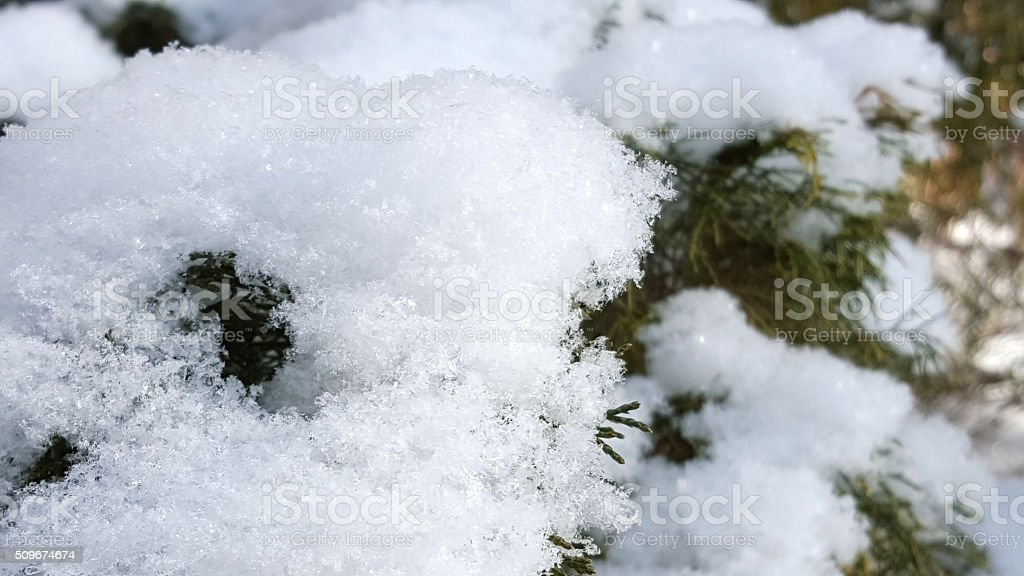 Closeup of snow on evergreen stock photo
