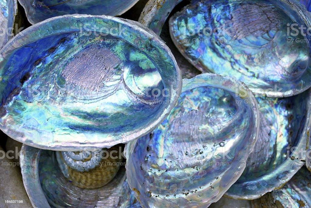 Close-up of some Paula shells also called Abalone stock photo