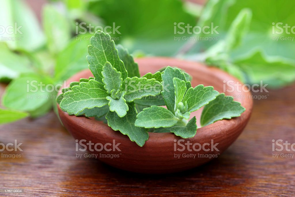 Close-up of stevia leaves in a clay bowl stock photo