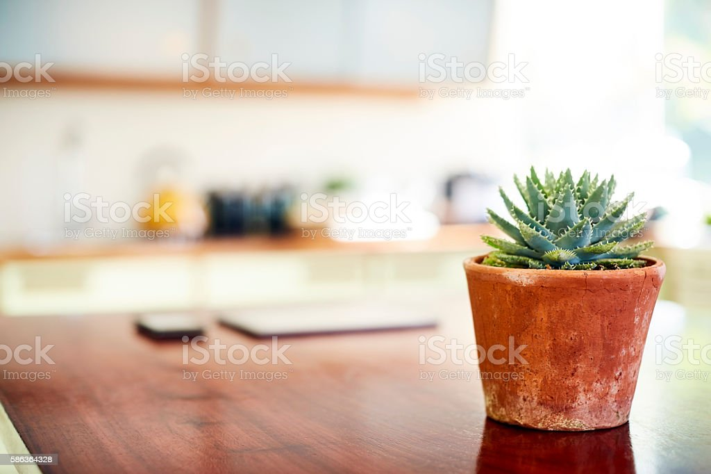 Close-up of succulent plant on kitchen island stock photo
