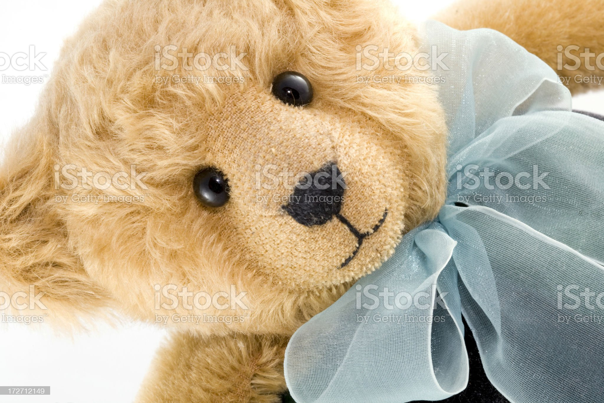 Close-up of Teddy Bear royalty-free stock photo