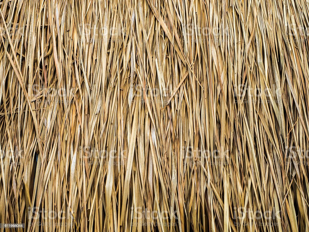 closeup of thatch roof stock photo