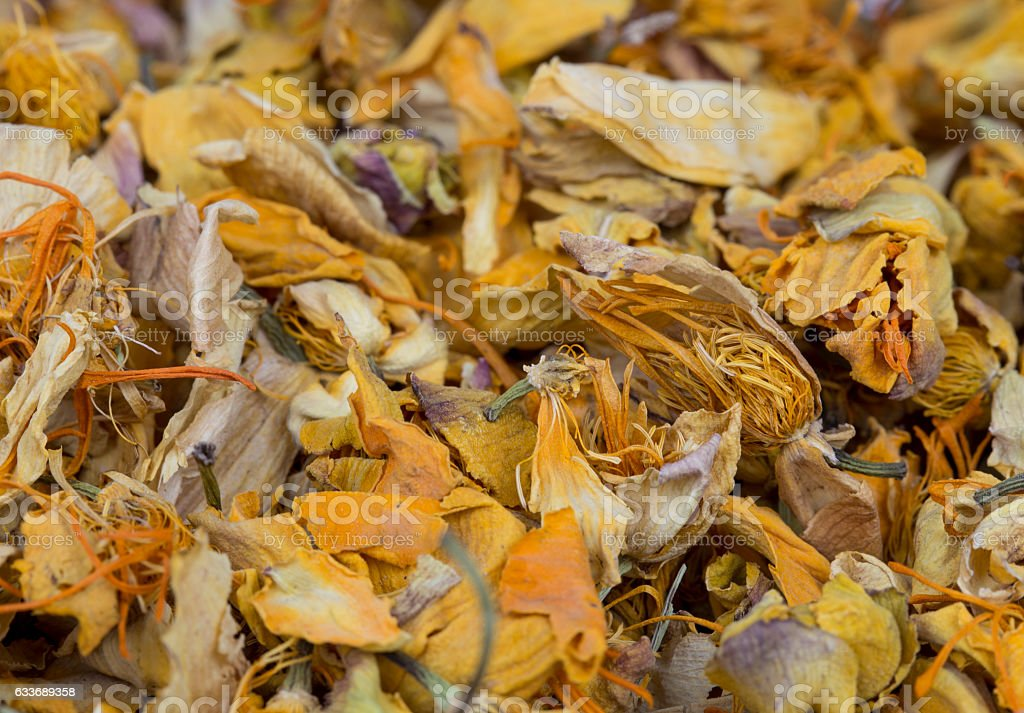 Closeup of the dried globeflower herb stock photo