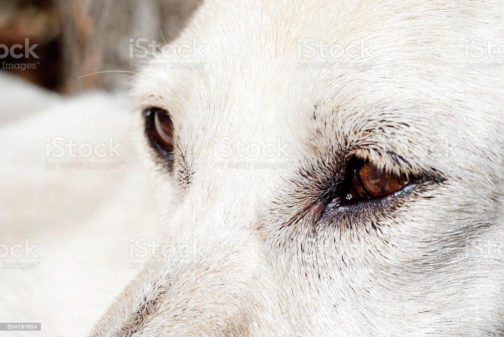 Close-up of the eye dog stock photo