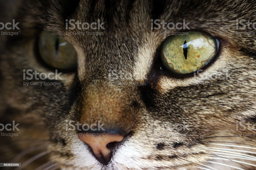 Close-up of the eye of a cat stock photo