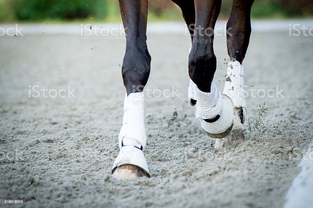 Closeup of the hooves from a horse stock photo
