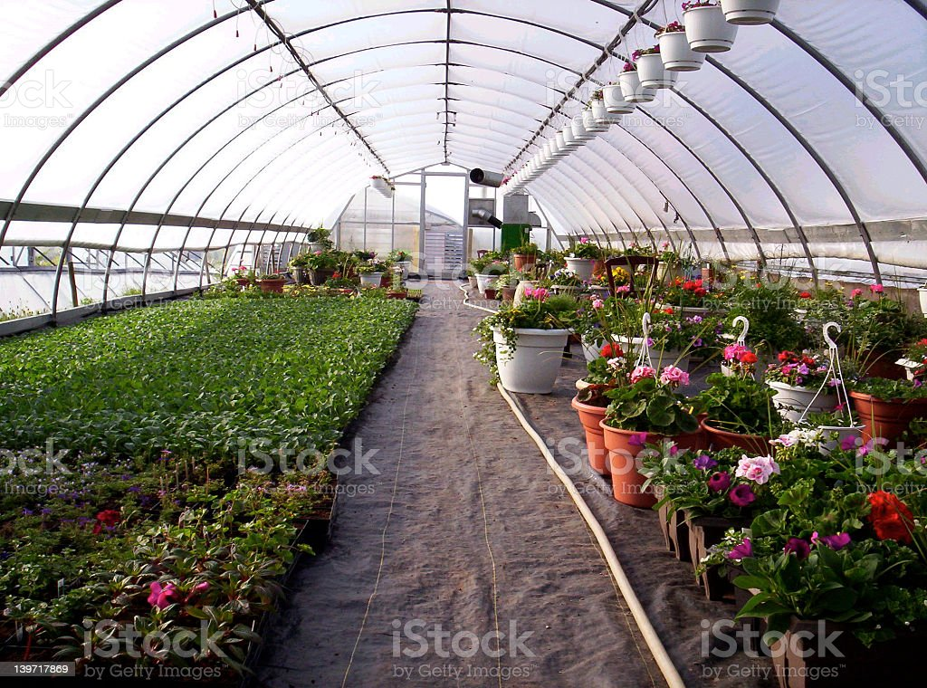 Close-up of the inside of a greenhouse full of plants royalty-free stock photo