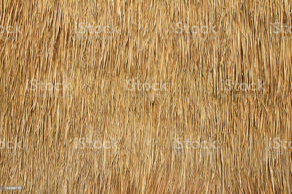 Close-up of the texture of a bulrush wall stock photo