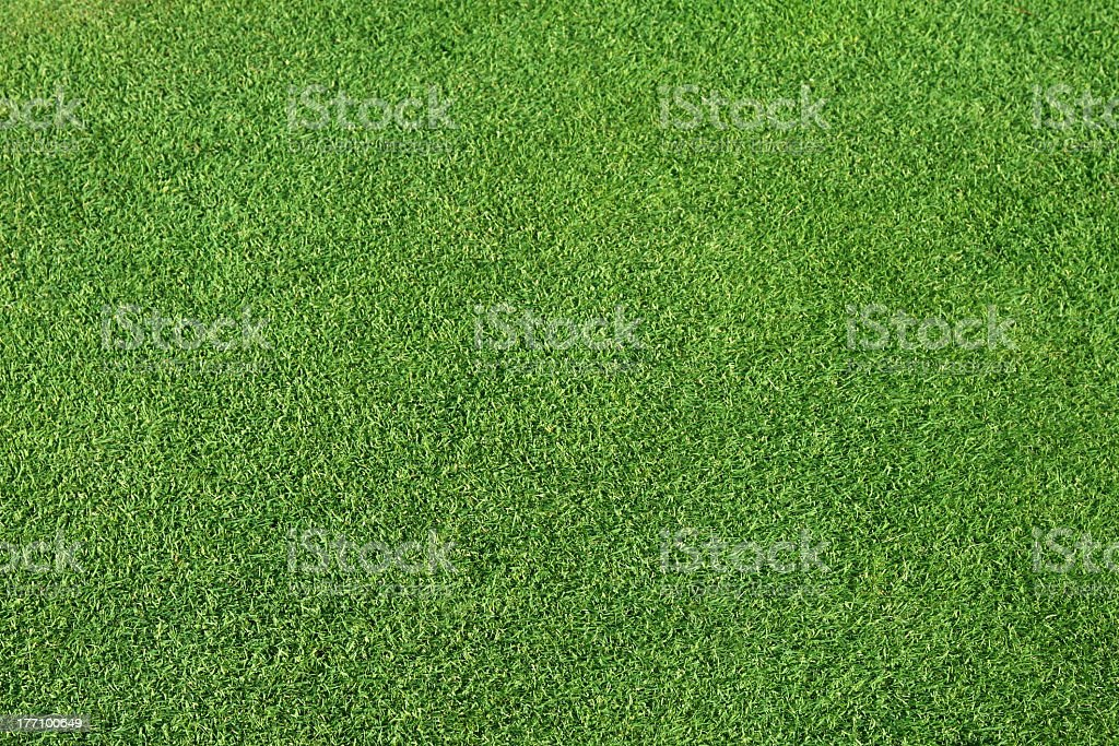 Close-up of the texture of green grass stock photo