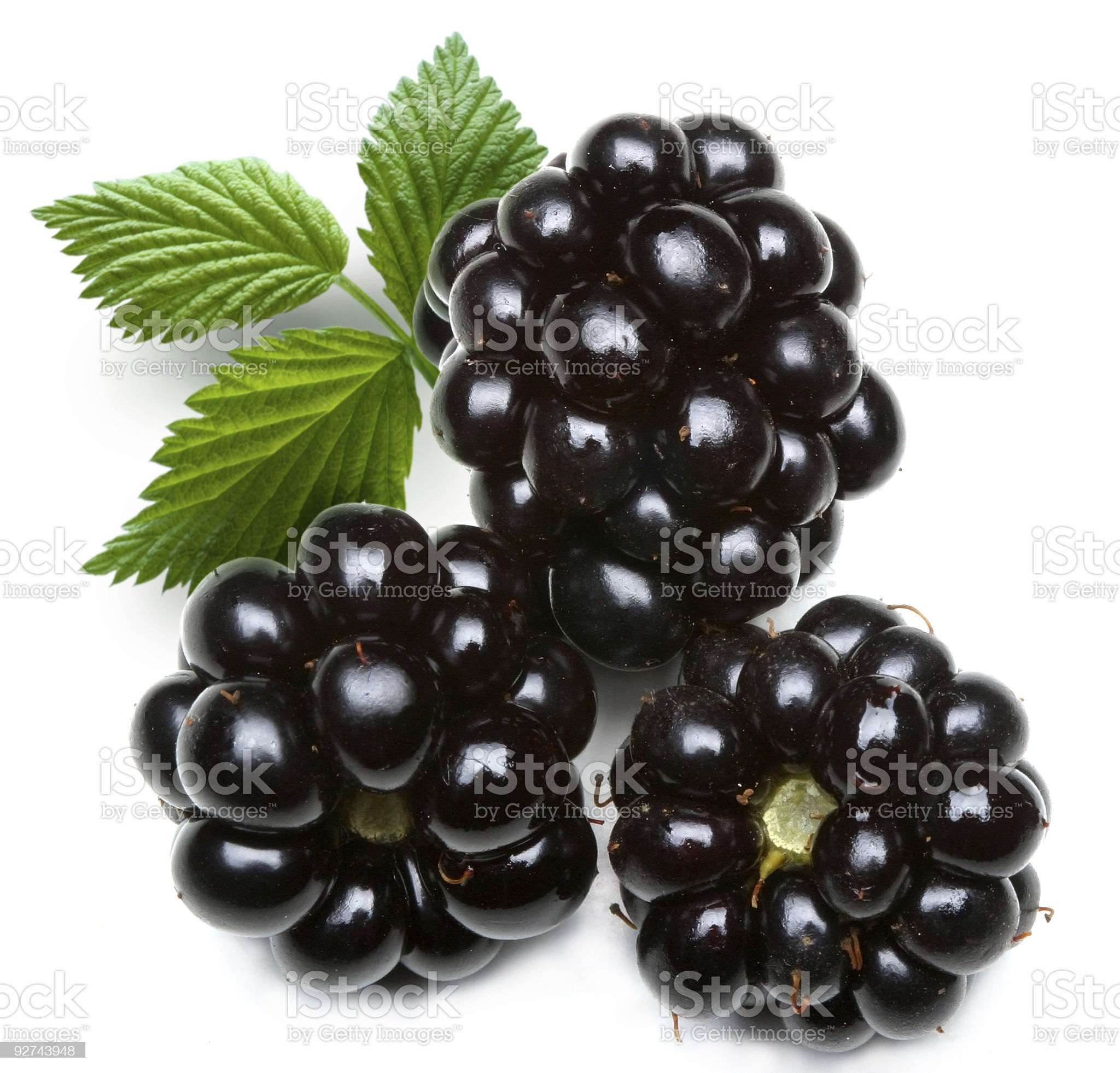 Closeup of three blackberries on white background royalty-free stock photo