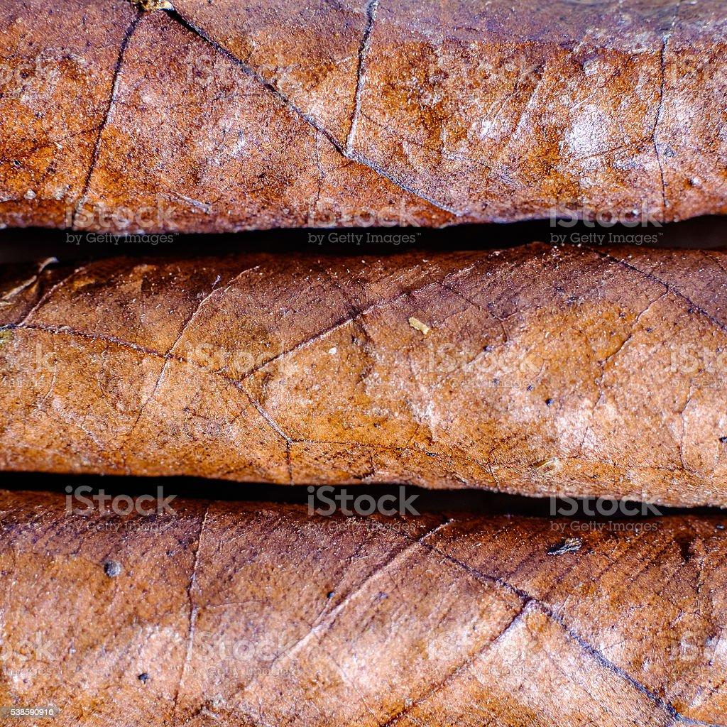 Closeup of three Tuscan cigars stock photo