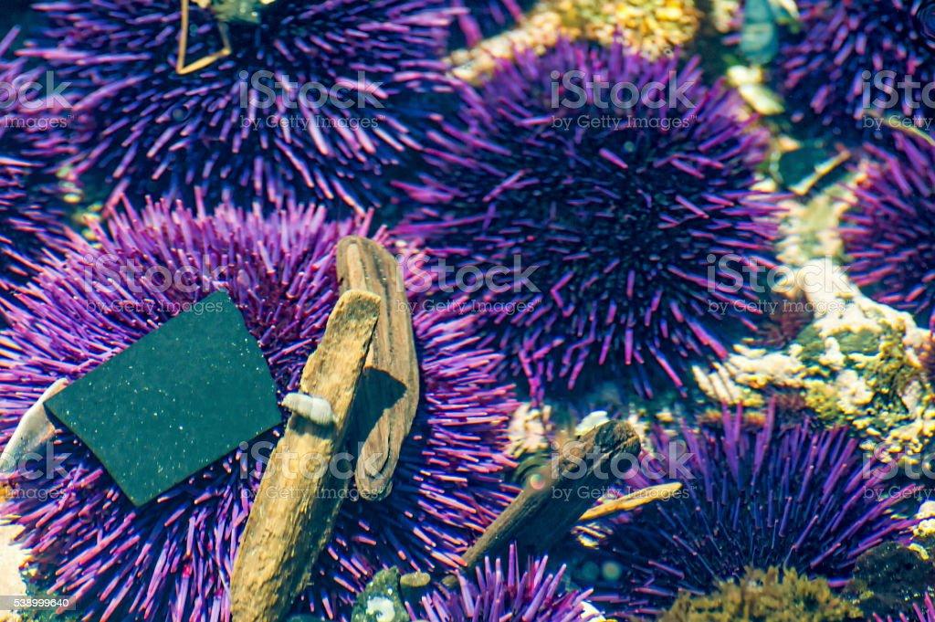 Closeup of Tidepools on Oregon Coast stock photo