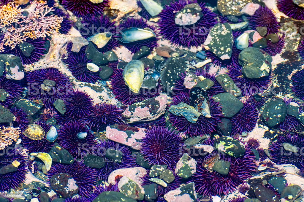 Closeup of Tidepools on Oregon Coast stock photo