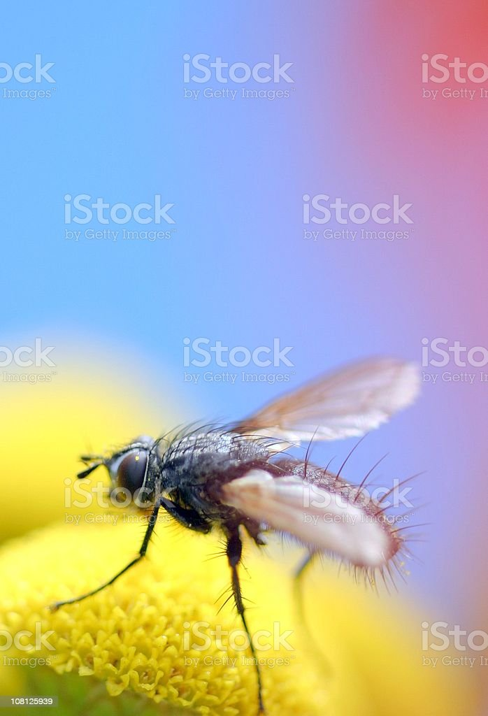 Close-up of Tiny Fly Landing on Flower stock photo