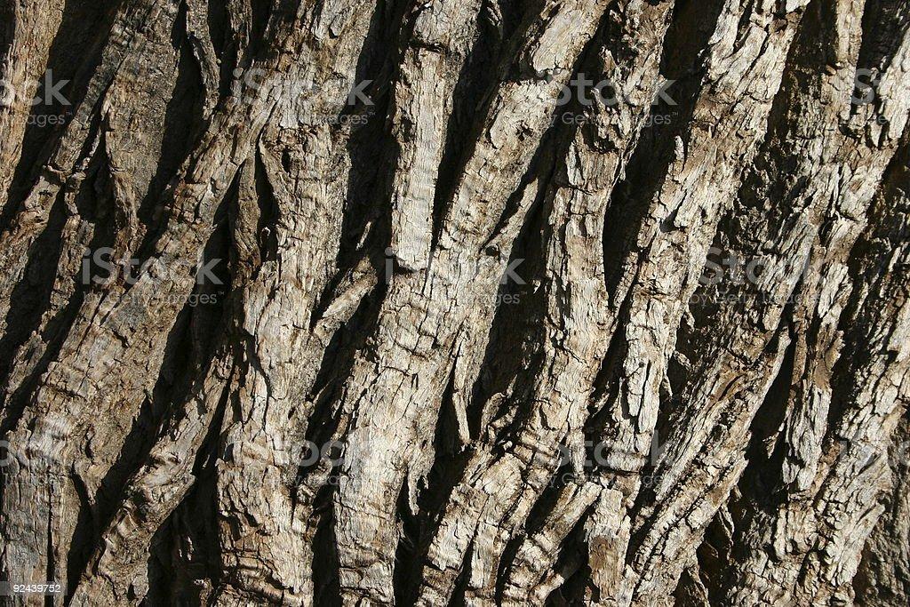 Close-up of tree bark royalty-free stock photo