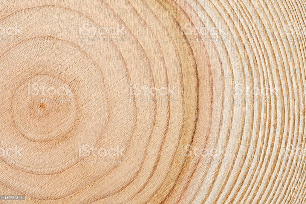 Close-up of tree rings stock photo
