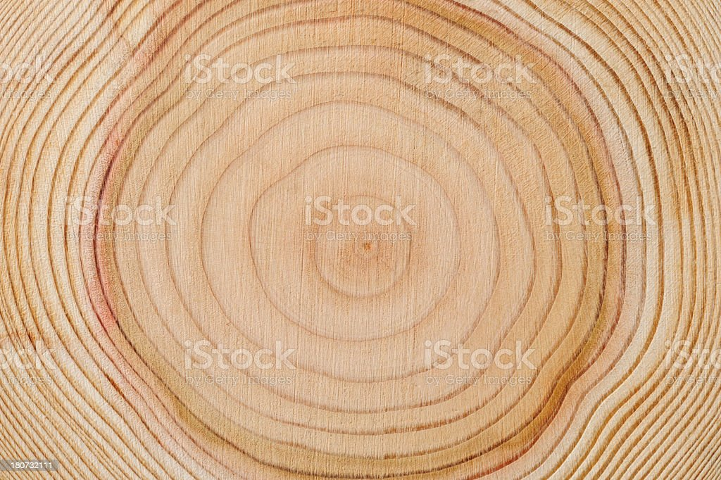 Close-up of tree rings texture background stock photo