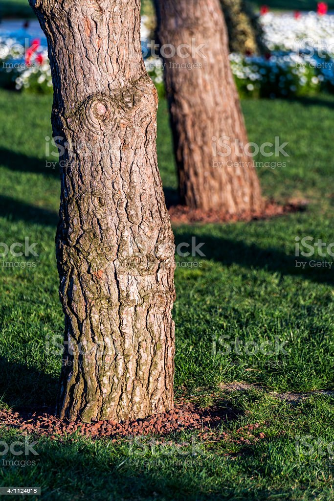 Close-up of Tree Trunk on Grass in Garden stock photo
