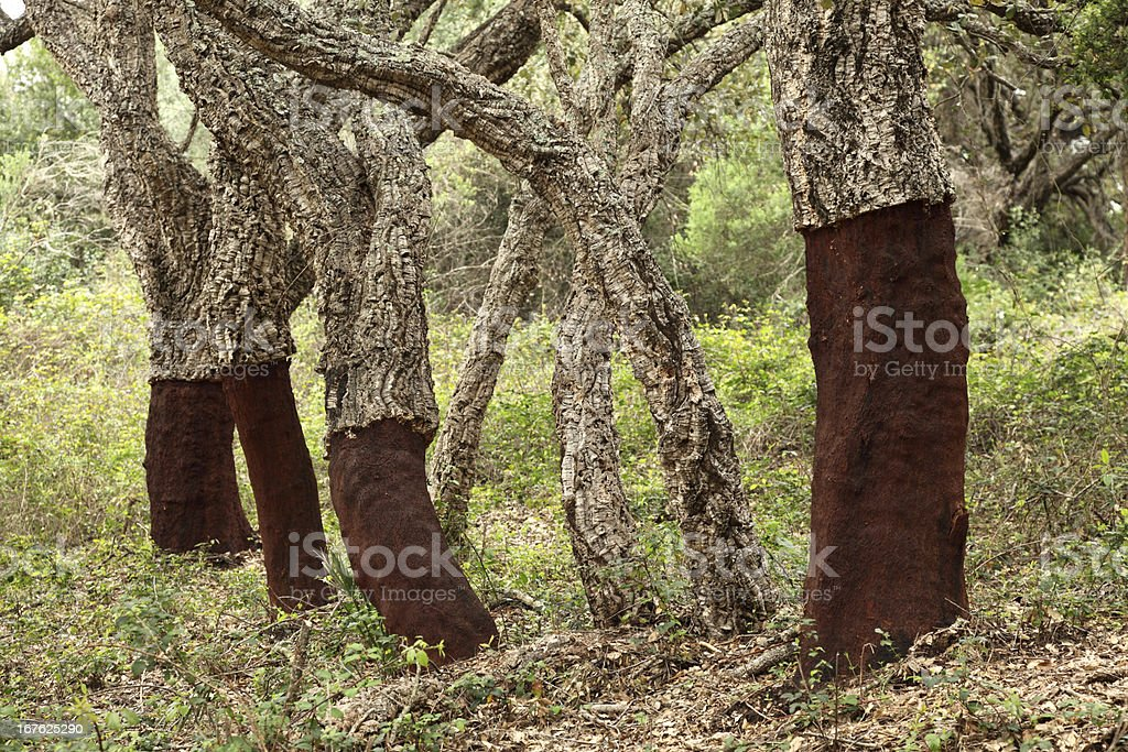 Close-up of trees with bark removed royalty-free stock photo