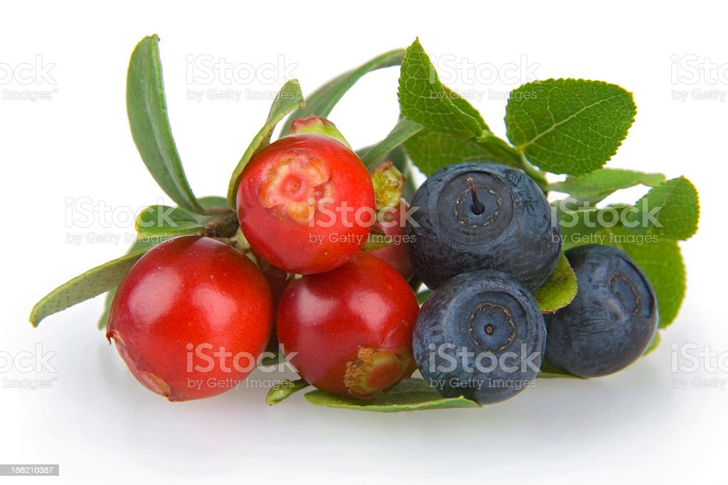 Close-up of twigs of fresh cranberries and bilberries royalty-free stock photo